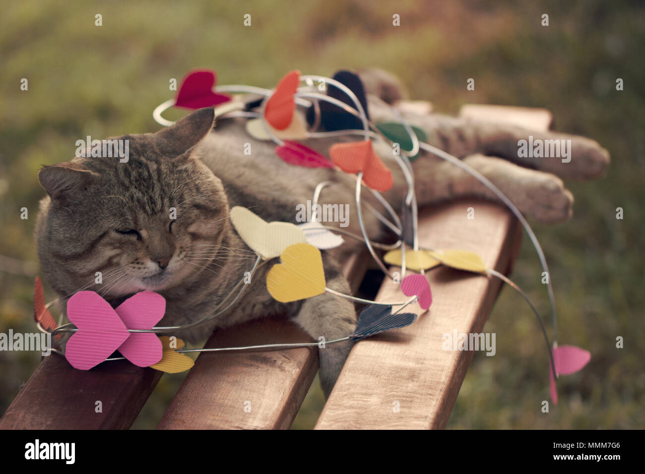 a Cat sitting on multicolored paper hearts Stock Photo