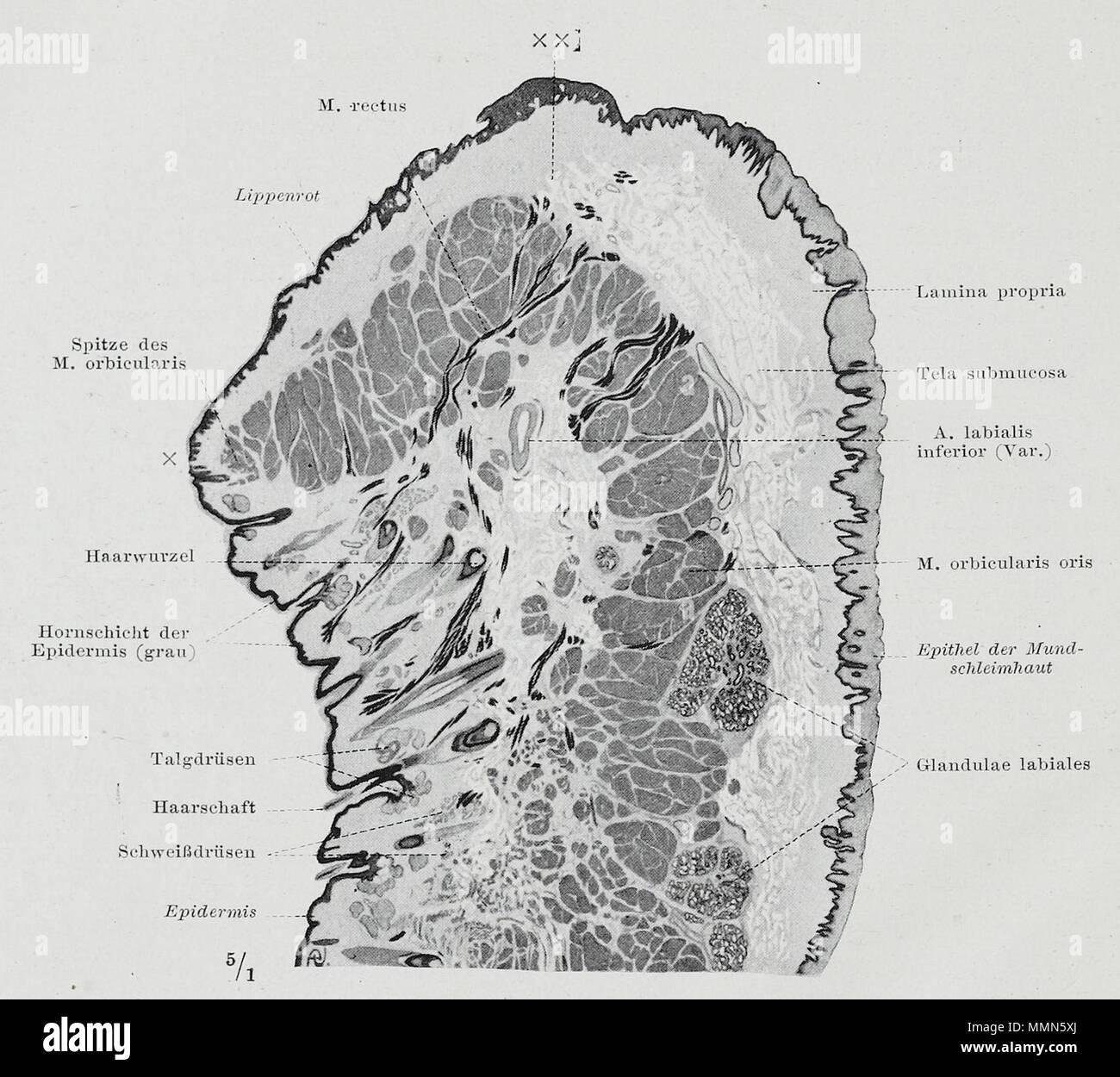 Fantastisch Anatomie Der Mund Und Rachen Bilder Zeitgenössisch ...