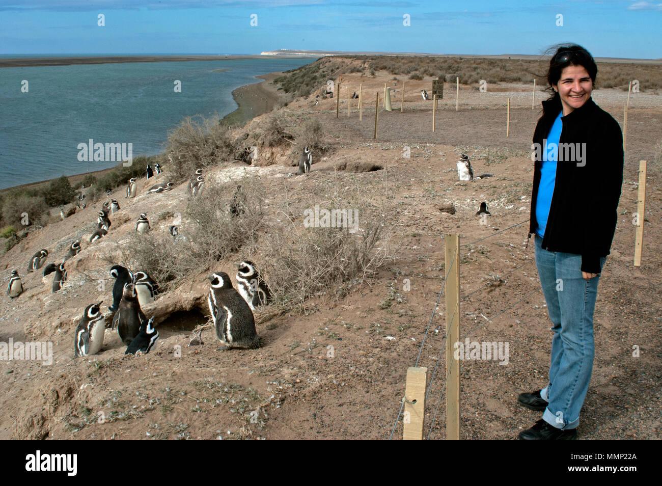 Woman observes Magellanic penguins, Spheniscus magellanicus, at the Caleta Valdes, Peninsula Valdes, Chubut, Patagonia, Argentina Stock Photo
