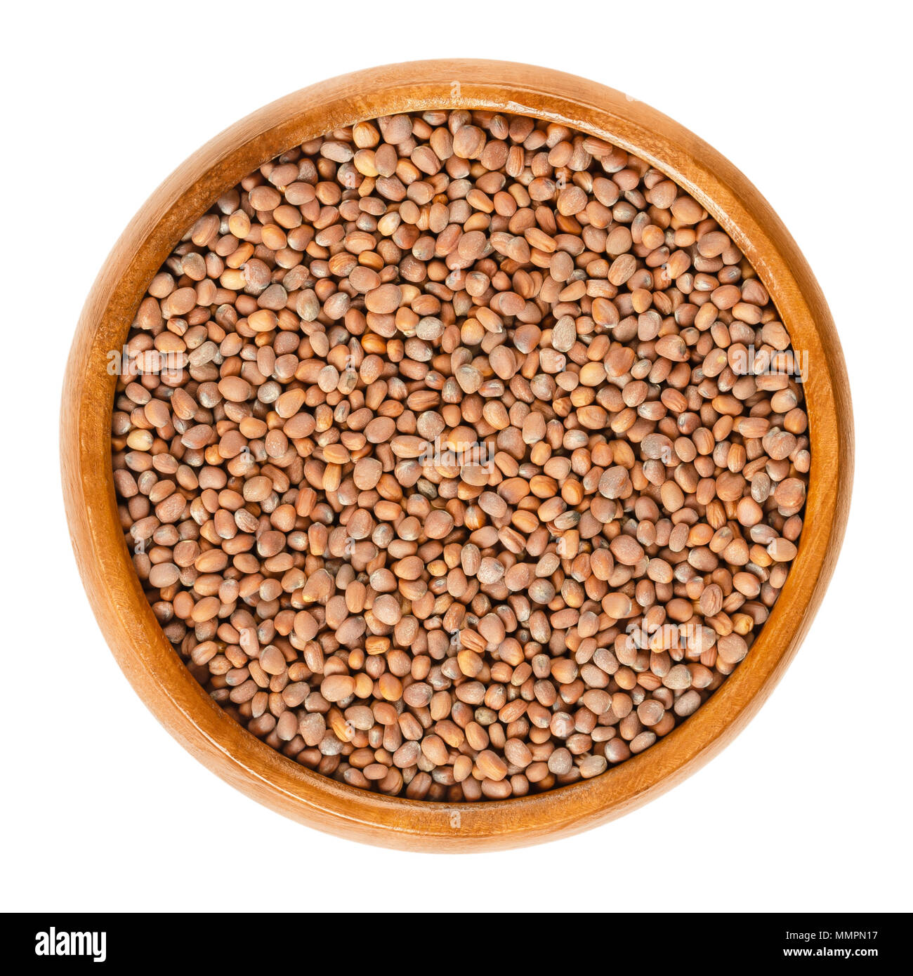 Daikon radish seeds in wooden bowl. Winter, Japanese or oriental radish. Raphanus sativus. Seeds for sprouting and consumption. Isolated macro photo. - Stock Image