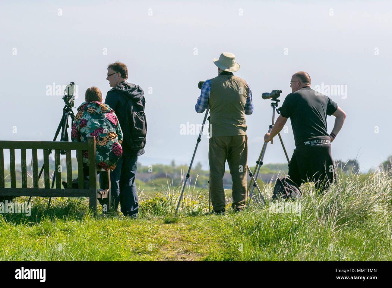 Southport, Merseyside, UK 13/05/2018. UK Weather. Uncommon sighting of Glossy Ibis as birdwatchers or birders descend on the resort to view a pair of these birds on the RSPB Marshside Nature Reserve. Credit: MediaWorldImages/AlamyLiveNews - Stock Image