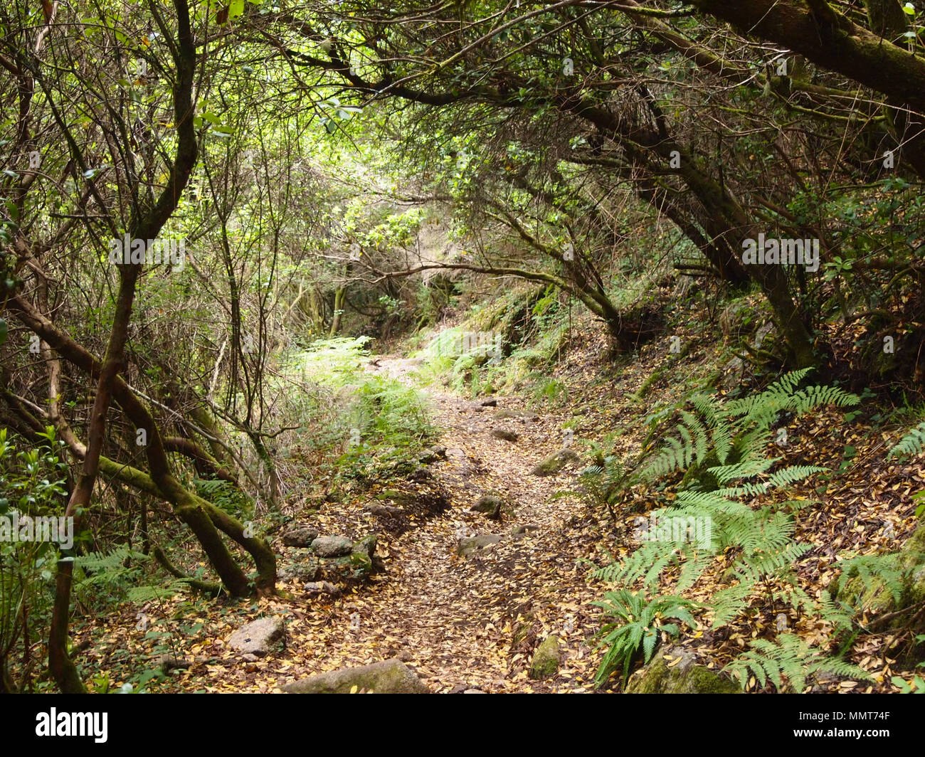 The Mata da Albergaria, a well-preserved oak forest within Peneda-Gerês national park, northern Portugal - Stock Image