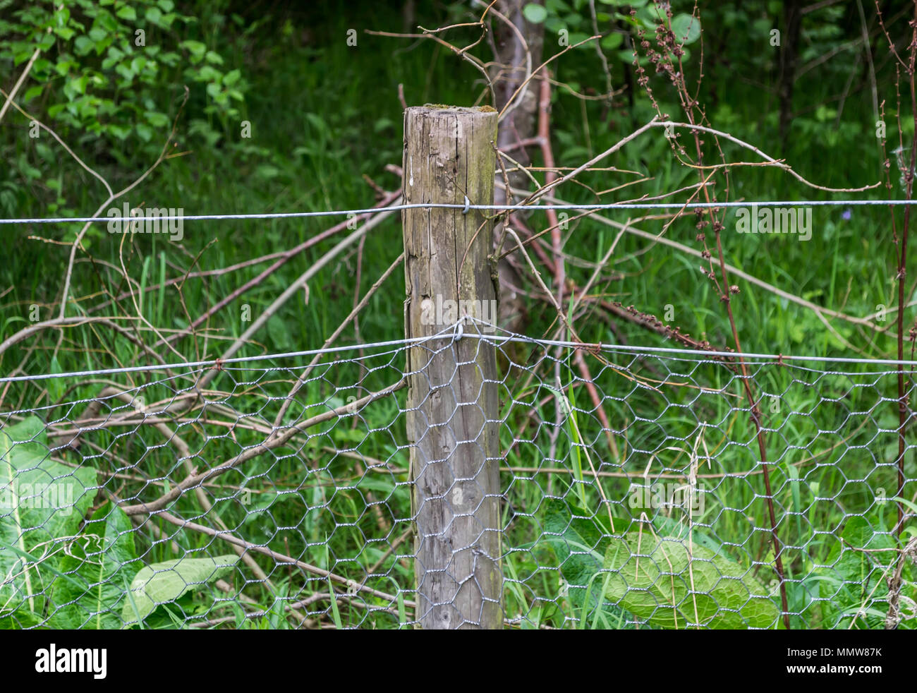 A wooden fence post holding up chicken wire with a forest in the background - Stock Image