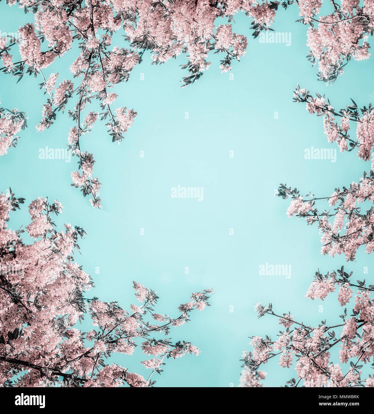 Beautiful Floral Background With Pastel Pink Blossom On Light