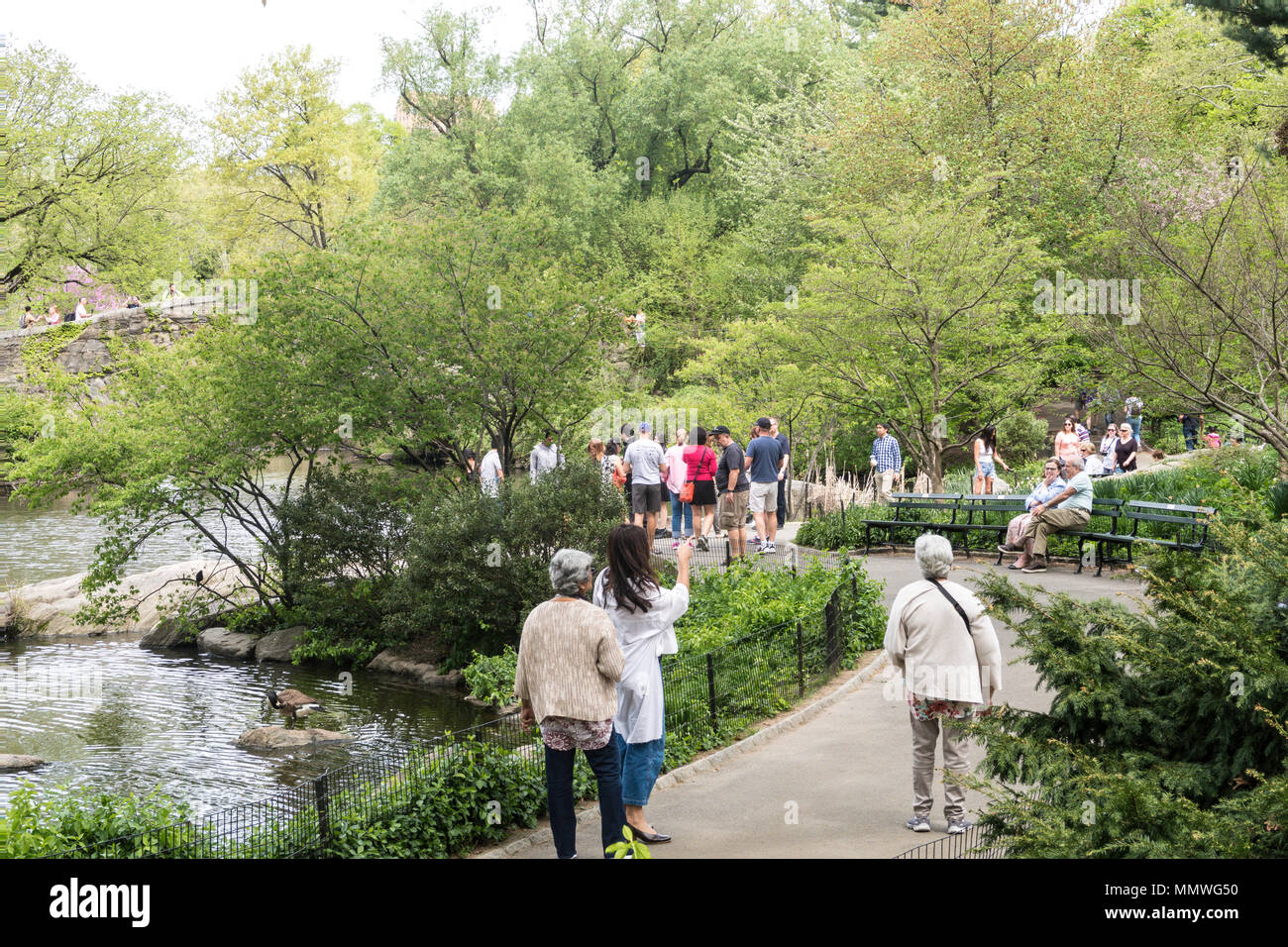 Tourists wander through Central Park on the Path next the Pond, NYC. USA - Stock Image