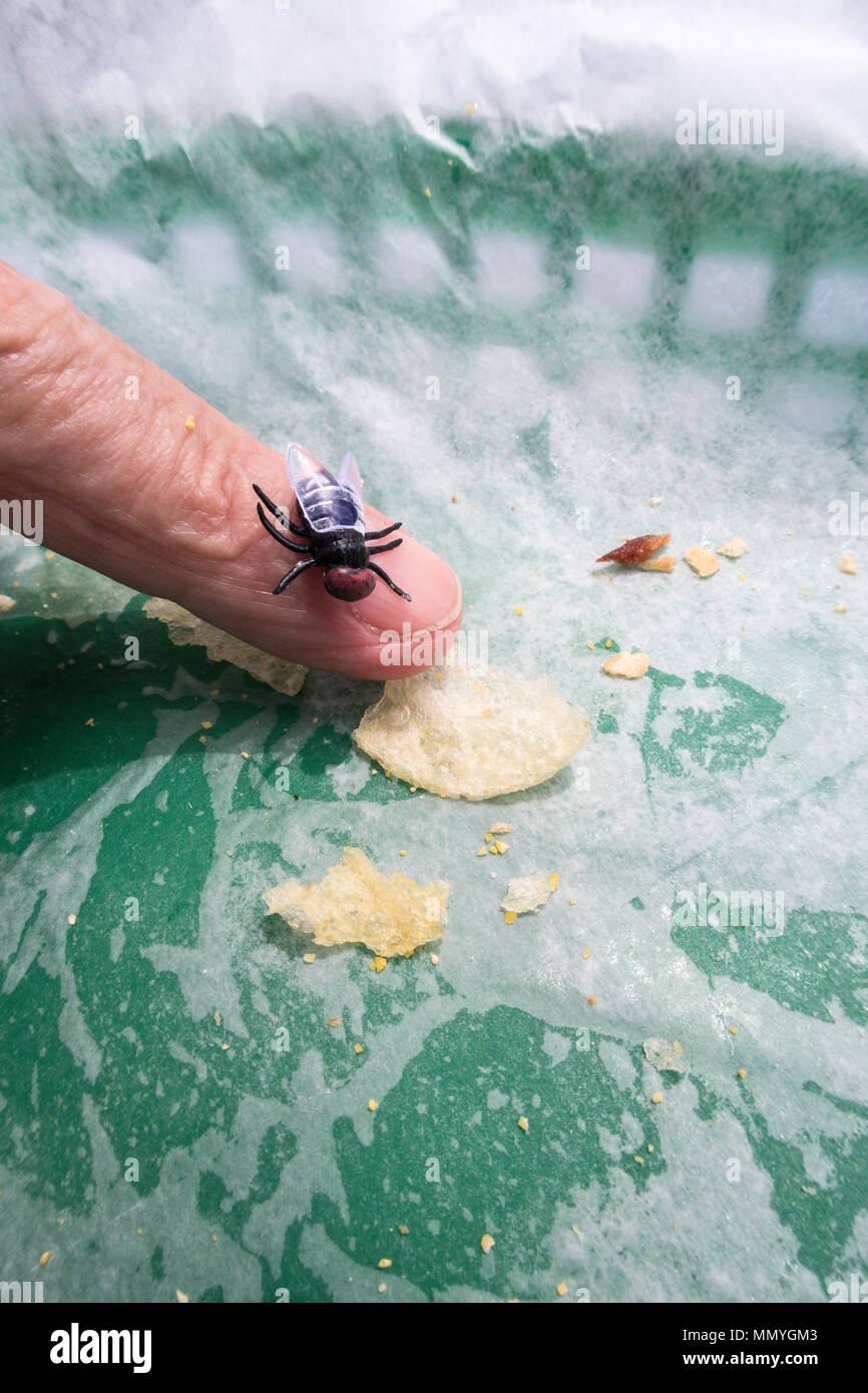 Houseflies are attracted to food, USA - Stock Image