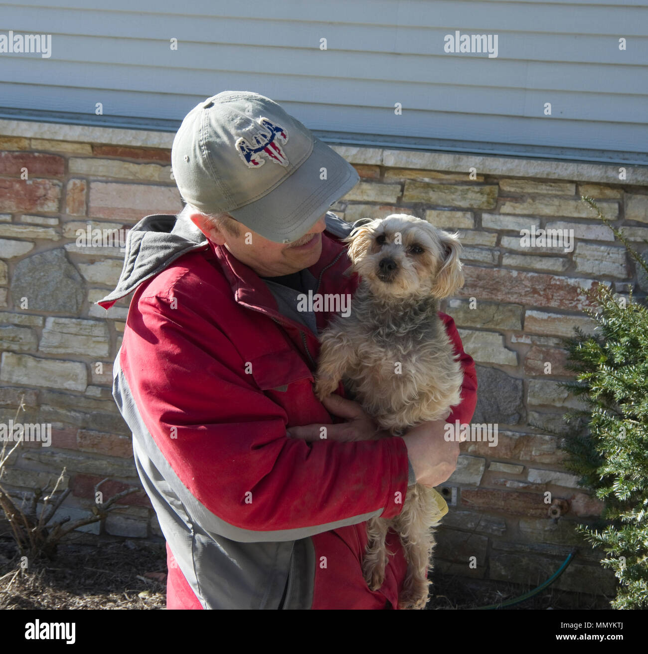 Smiling man holding Yorkshire Terrier dog, Canis lupus familiaris Stock Photo