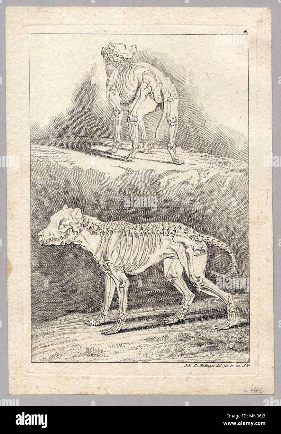 Atemberaubend Wesentliches Der Menschlichen Anatomie Und Physiologie ...