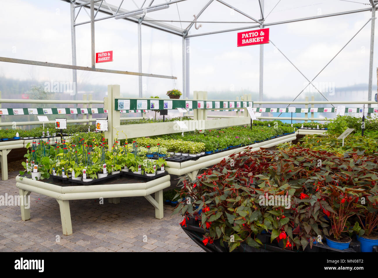 Overview Of A Garden Centre Greenhouse With A Variety Of ...