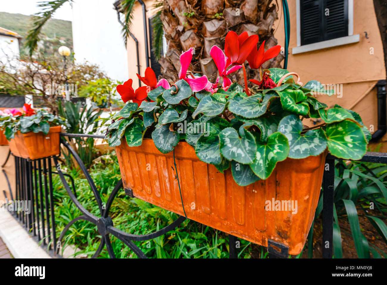 Potted spring flowers on a fence close up stock photo 185033136 potted spring flowers on a fence close up mightylinksfo