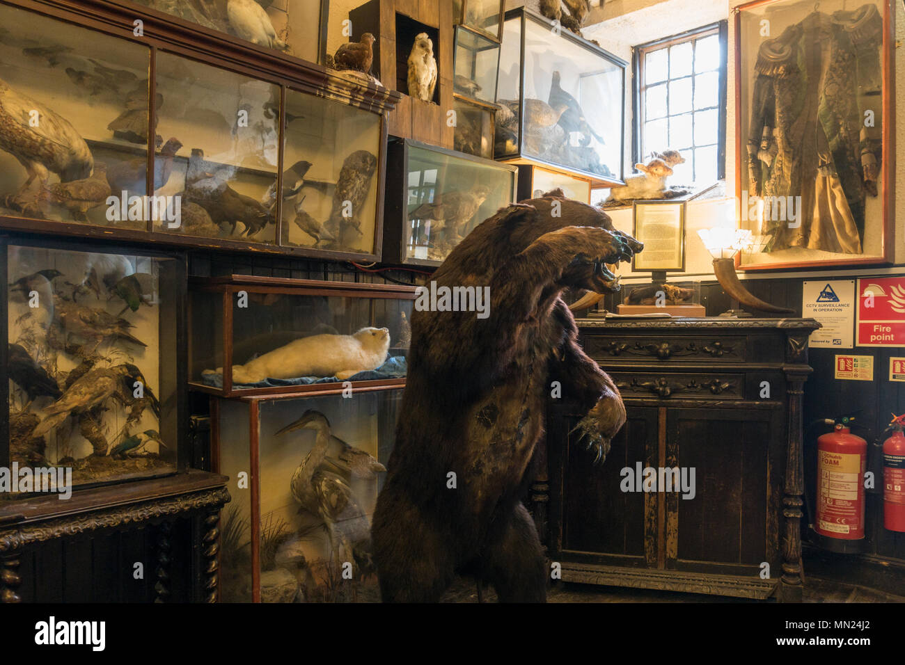 The Drovers Inn interior - reception area with stuffed animals, Loch Lomond, Inverarnan, Scotland, UK - Stock Image