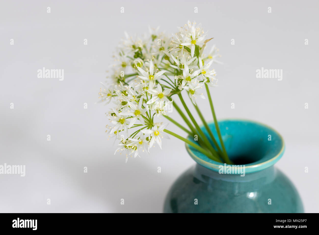 A posy of wild garlic flowers (Ramsons) in a handmade ceramic vase. - Stock Image