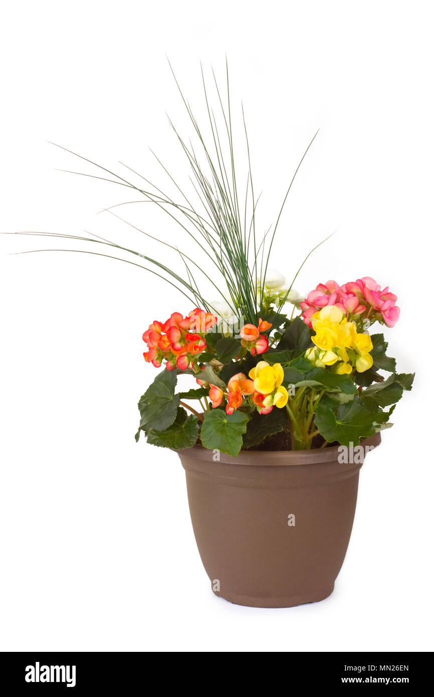 Pot Plant, Flowers in Garden Planter Pot - Stock Image
