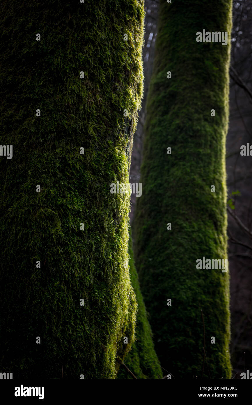 Trees on detail - Stock Image