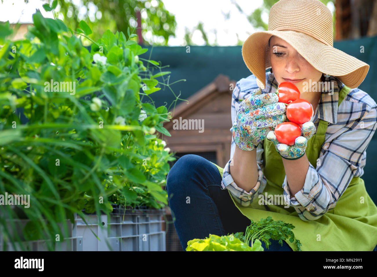 Beautiful young small business farmer smelling freshly harvested tomatoes in her garden. Homegrown bio produce concept. Small business owner. - Stock Image
