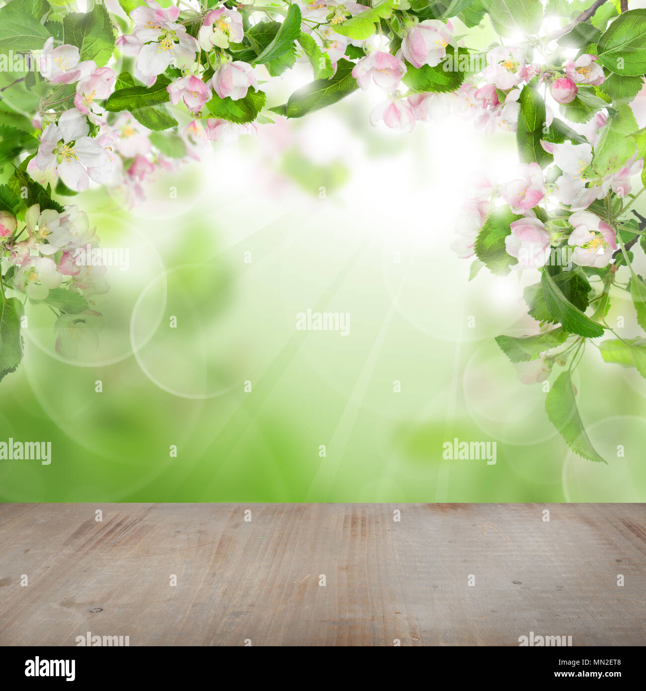 Spring Green Leaves And Flowers Background With Plants: Spring Apple Flowers, Green Leaves, Abstract Bokeh Light