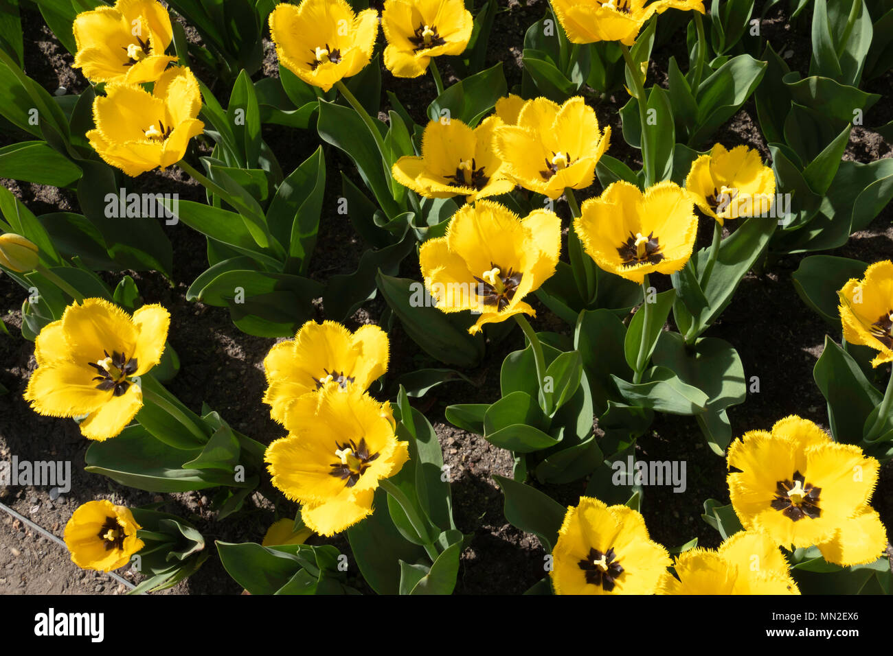 Britzer Garten Neuklln Berlin Germany 2018 Garden With Spring