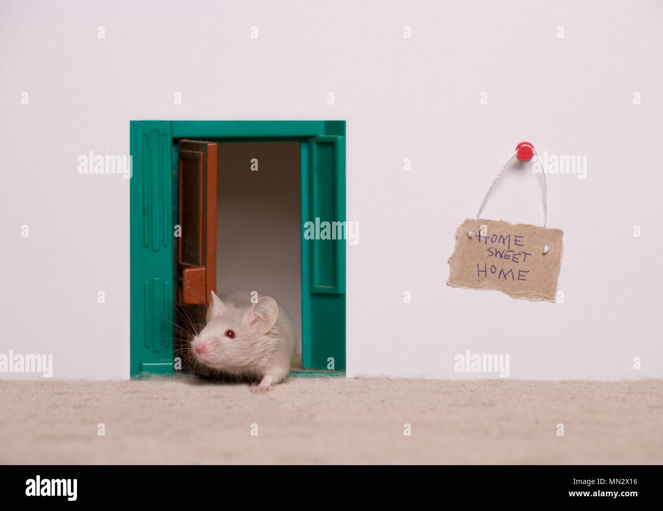 A mouse with its very own house. - Stock Image