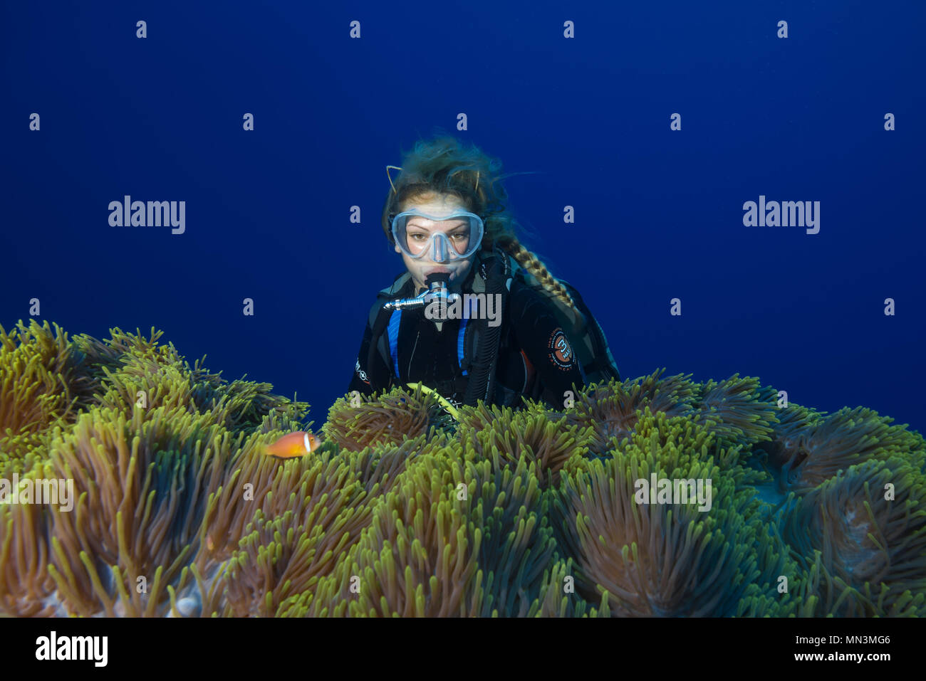 Female Scuba Diver Looks On Big Beautiful Anemone