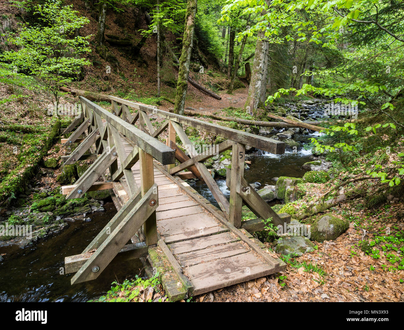 Hiking path with bridge in Ravenna gorge, near Hinterzarten, Black Forest, Baden-Württemberg, Germany Stock Photo