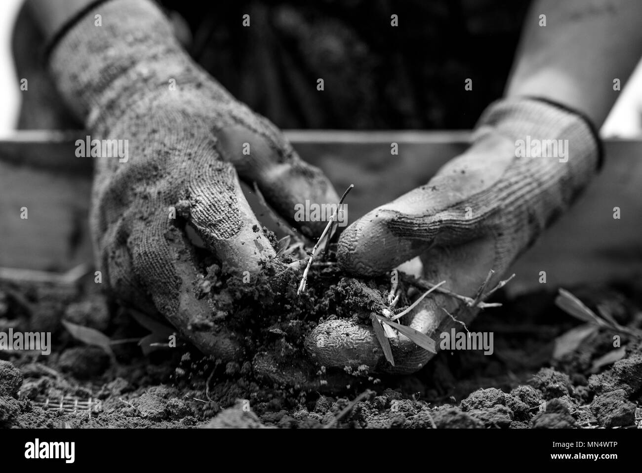 A local worker breaks up large clumps of dirt before pushing it through the dry screening platform as they search for material evidence at a dig site in Quang Binh Province, Vietnam, Aug. 20, 2017. Defense POW/MIA Accounting Agency (DPAA) team members deployed to the area in hopes of locating U.S. service members who went missing from the Vietnam War. The mission of DPAA is to provide the fullest possible accounting for our missing personnel to their families and the nation. (U.S. Marine Corps photo by Sgt. Kelly L. Street) - Stock Image