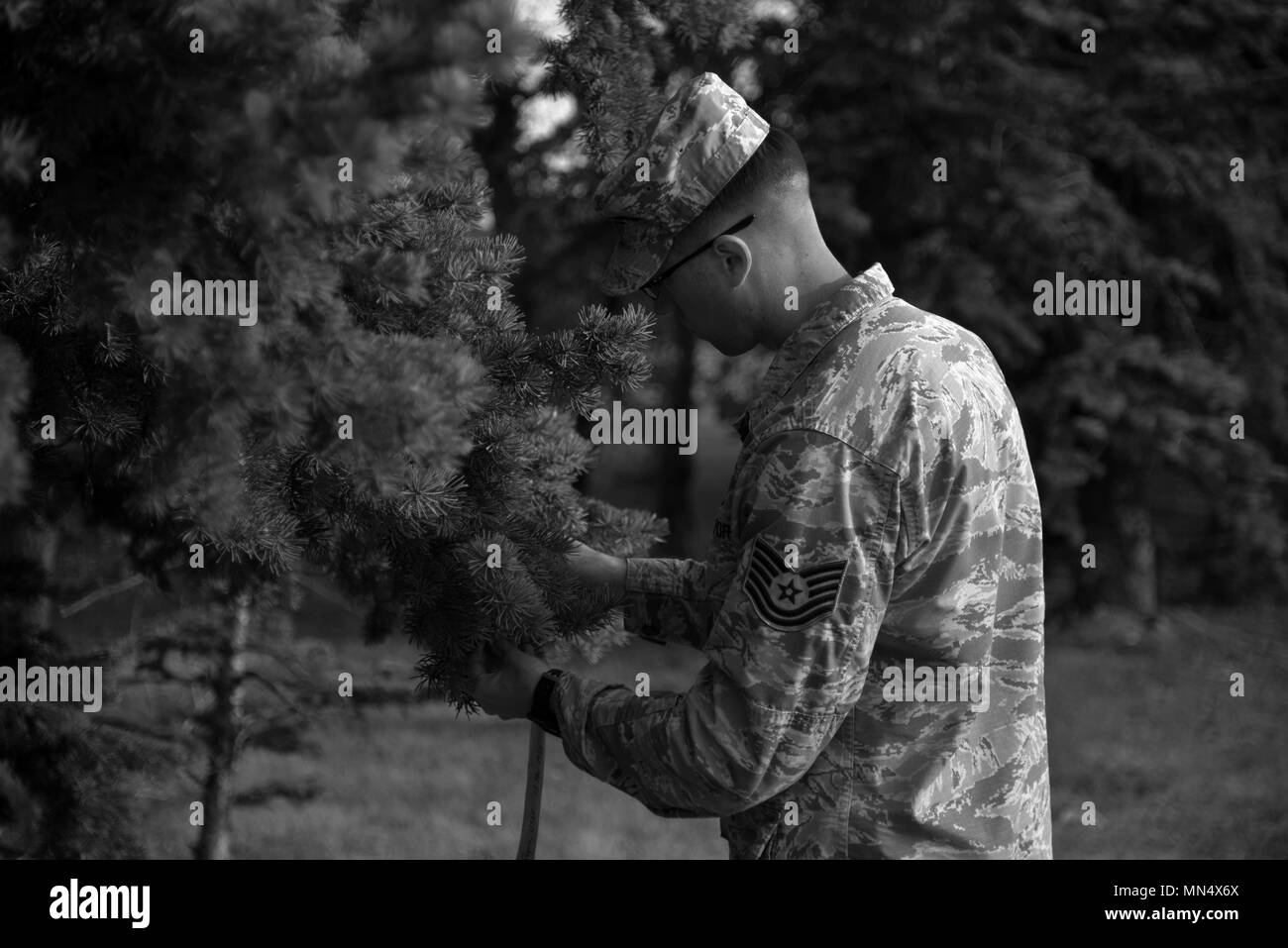 Tech. Sgt. Brandon C. Rogers, 5th Communications Squadron intrusion detection systems NCO in charge, ties a ribbon on a tree at Minot Air Force Base, N.D., Aug. 30, 2017. The ribbons symbolize a humble tribute to the service members who were prisoners of war or missing in action. (U.S. Air Force photo by Airman 1st Class Dillon J. Audit) - Stock Image