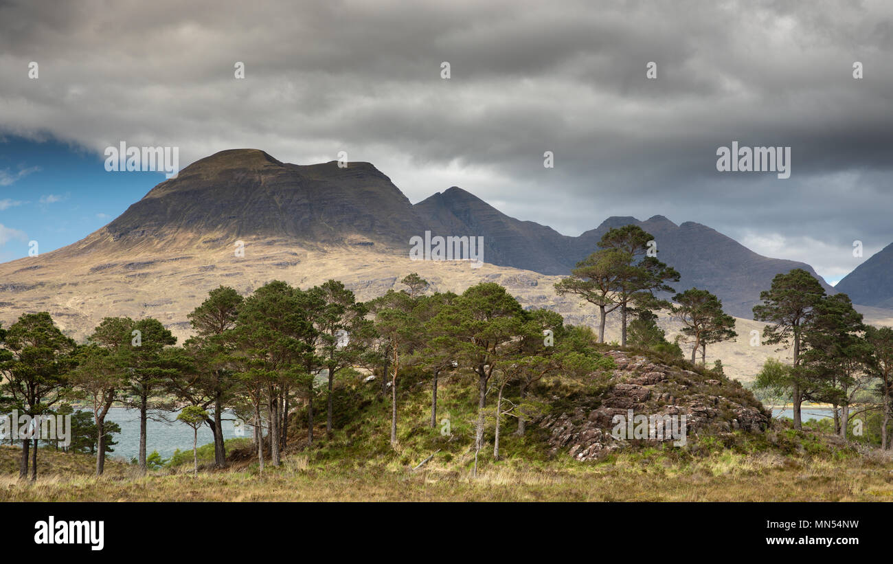 Caledonian Pines above Loch Torridon with Beinn Aligin beyond, Ben Damh Estate, Wester Ross, Scotland, UK - Stock Image