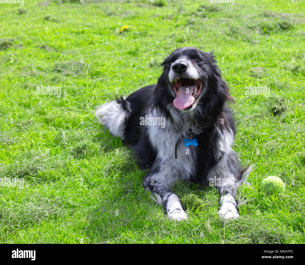 Dog in the park - Stock Image
