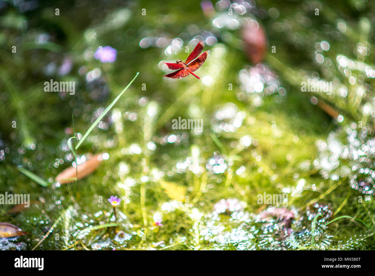nature and its beauty Stock Photo