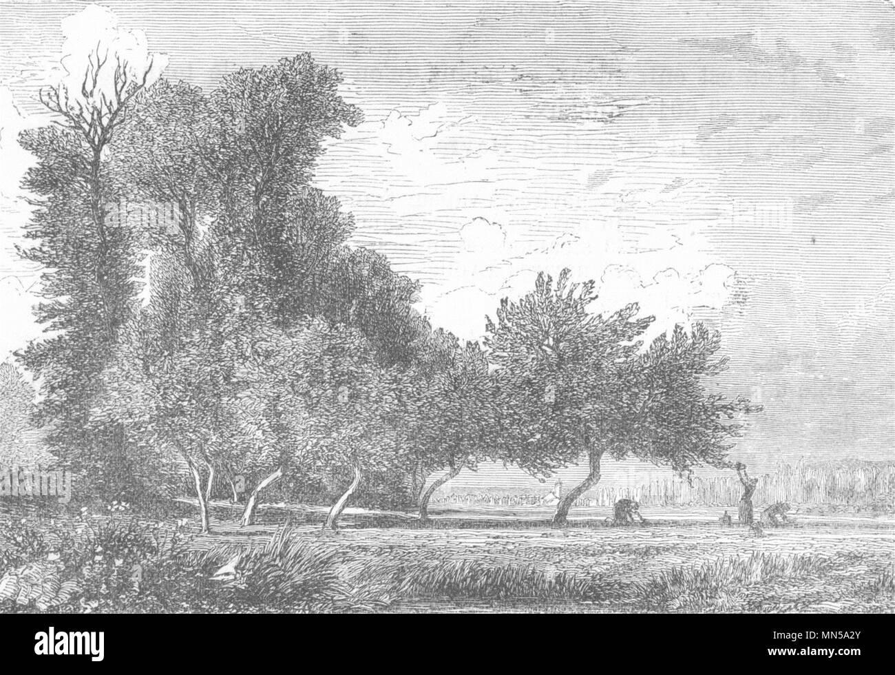 SEINE-MARITIME. Le Havre. Paysage aux environs de Gournay 1880 old print - Stock Image