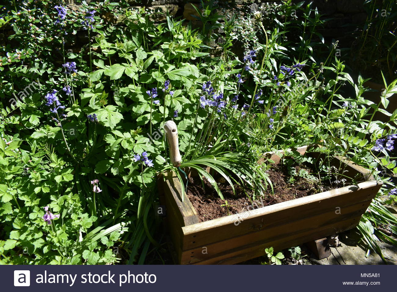 Garden shrubs - Stock Image