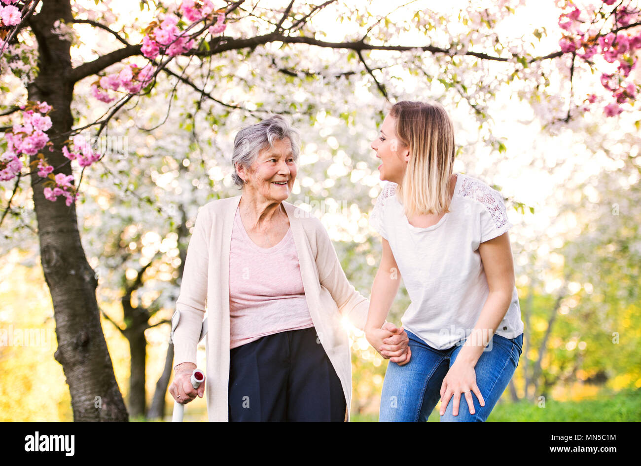 Elderly grandmother with forearm crutch and an adult granddaughter walking outside in spring nature. - Stock Image