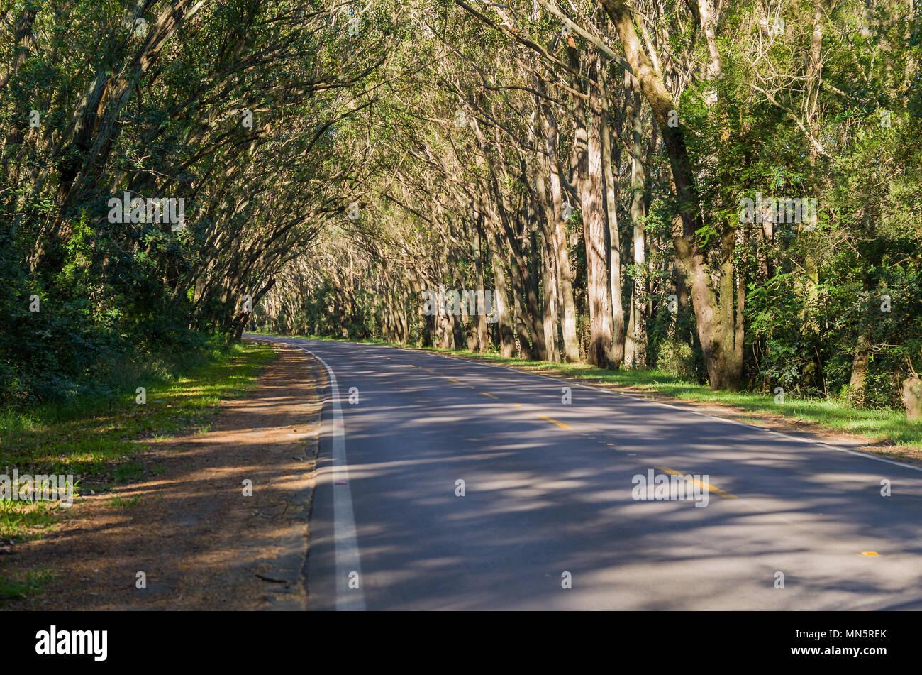 Pinhal Rio Grande do Sul fonte: c8.alamy.com