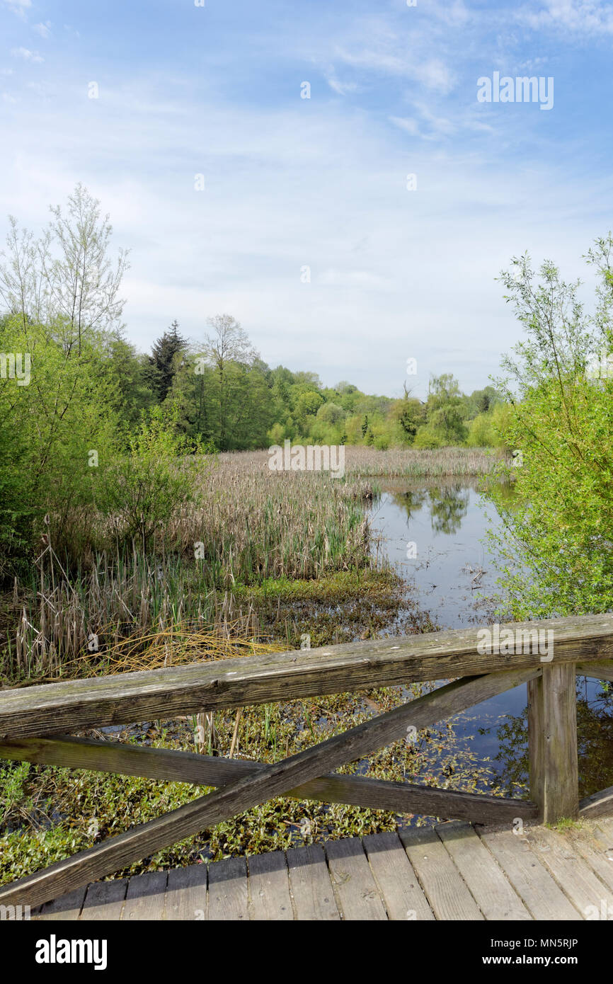 Wetlands and pond in Jericho Beach Park ecological area in spring, Vancouver, BC, Canada - Stock Image