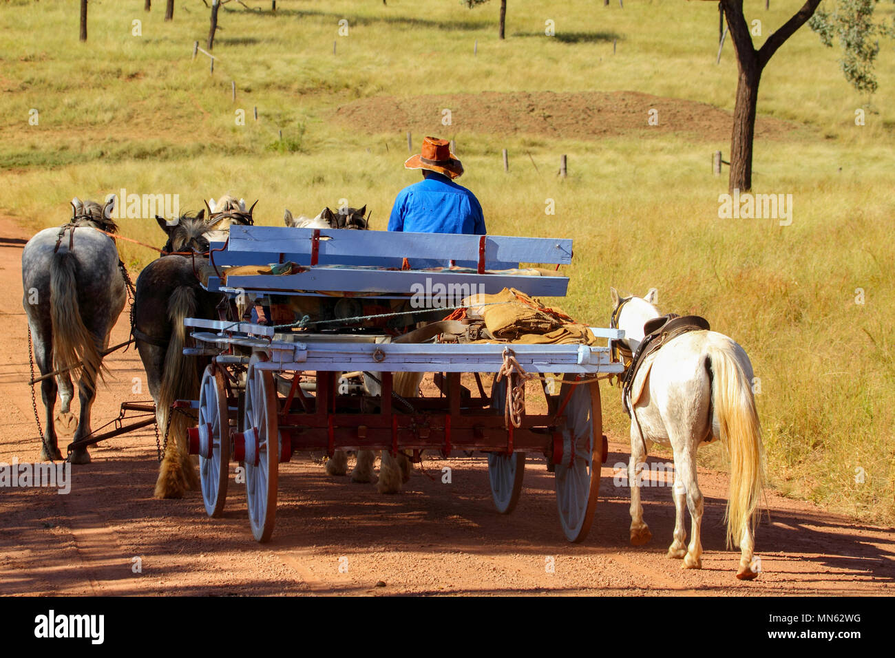 Draught horse team pulling a wagon on country road. - Stock Image