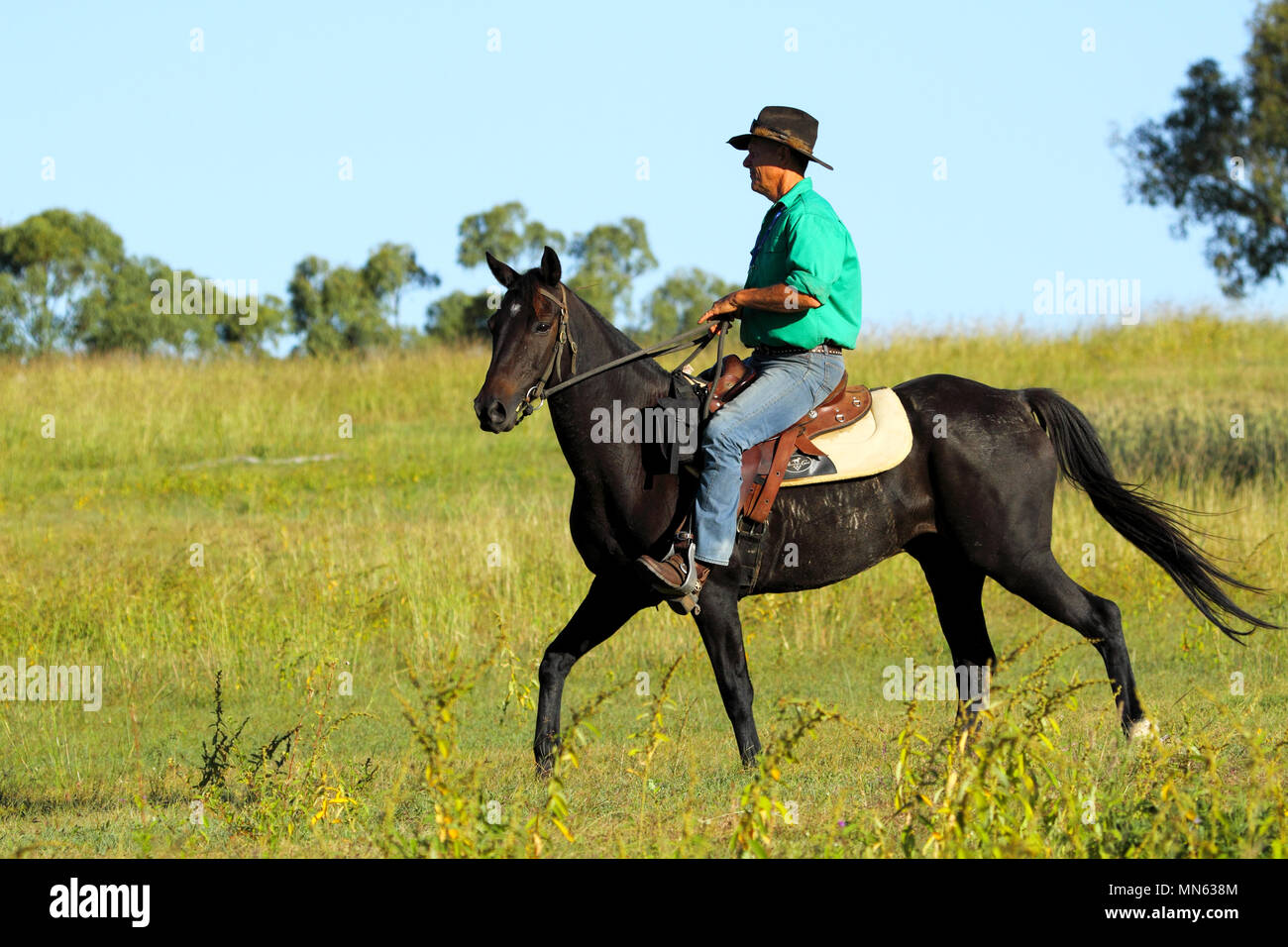 A cowboy in green shirt riding a horse on a farm. - Stock Image