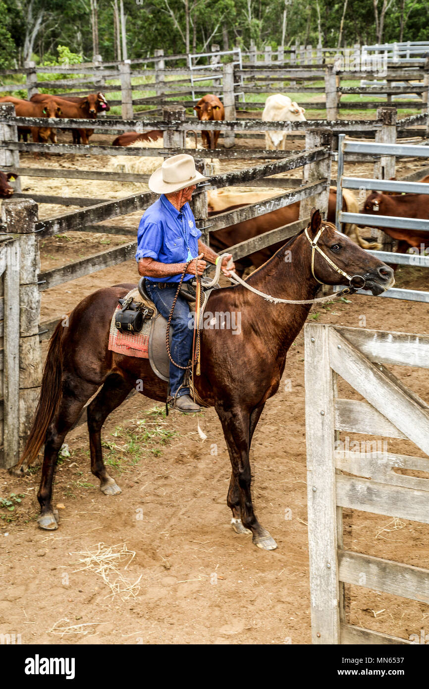 A stockman on his horse in livestock sale yards. - Stock Image