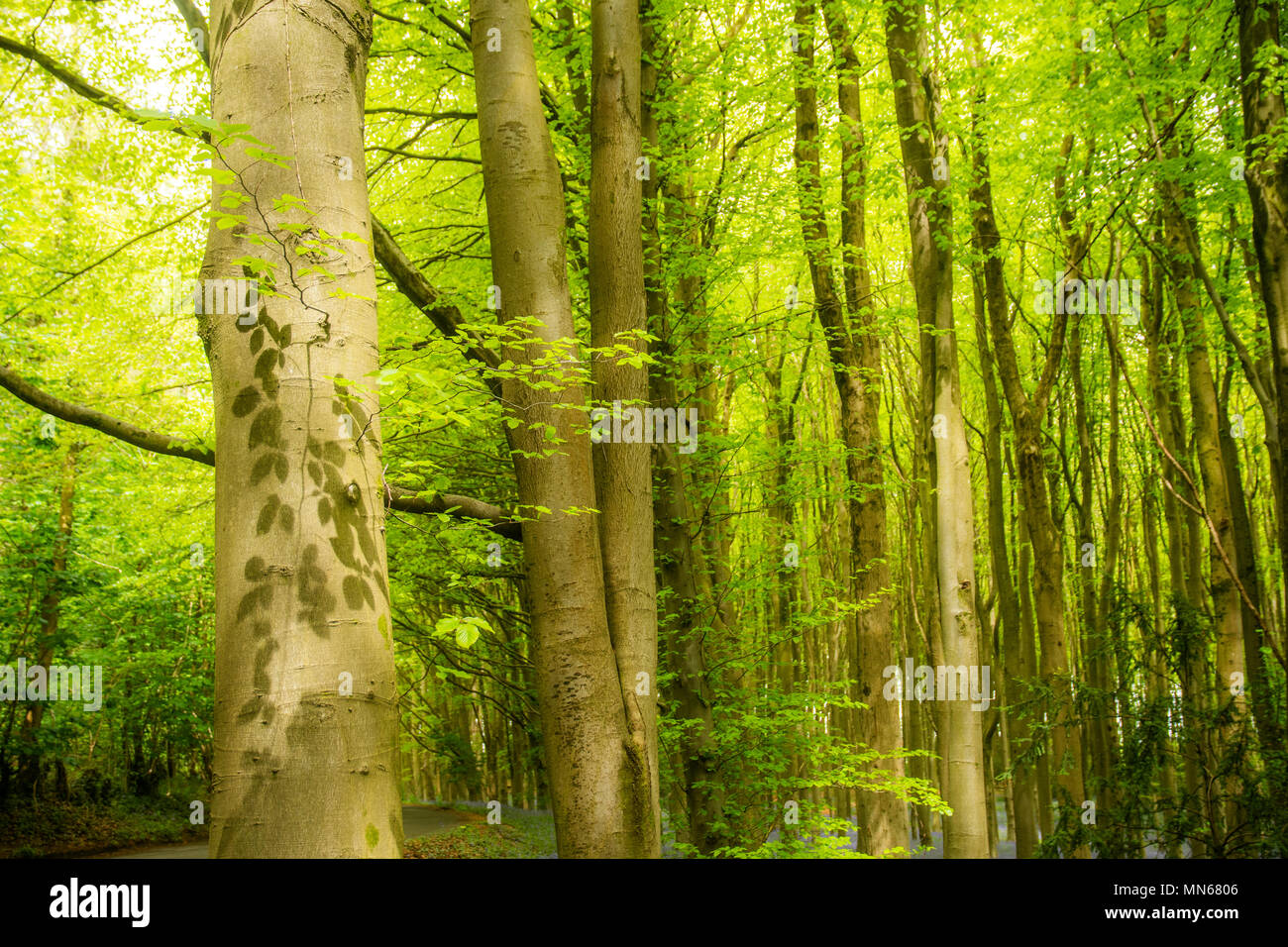 Leaves giving shaow patterns accross the tree - Stock Image