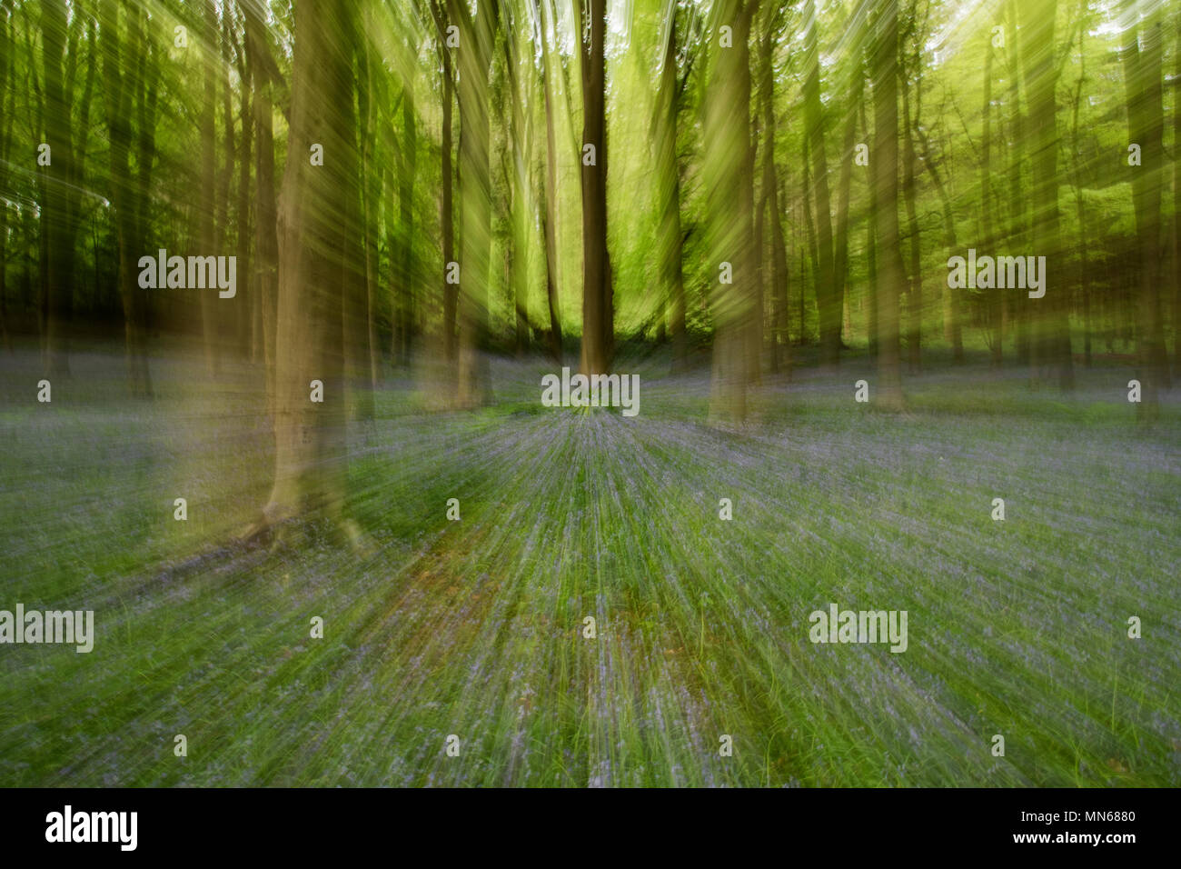 Lens zoomed effect on a woodland trees - Stock Image