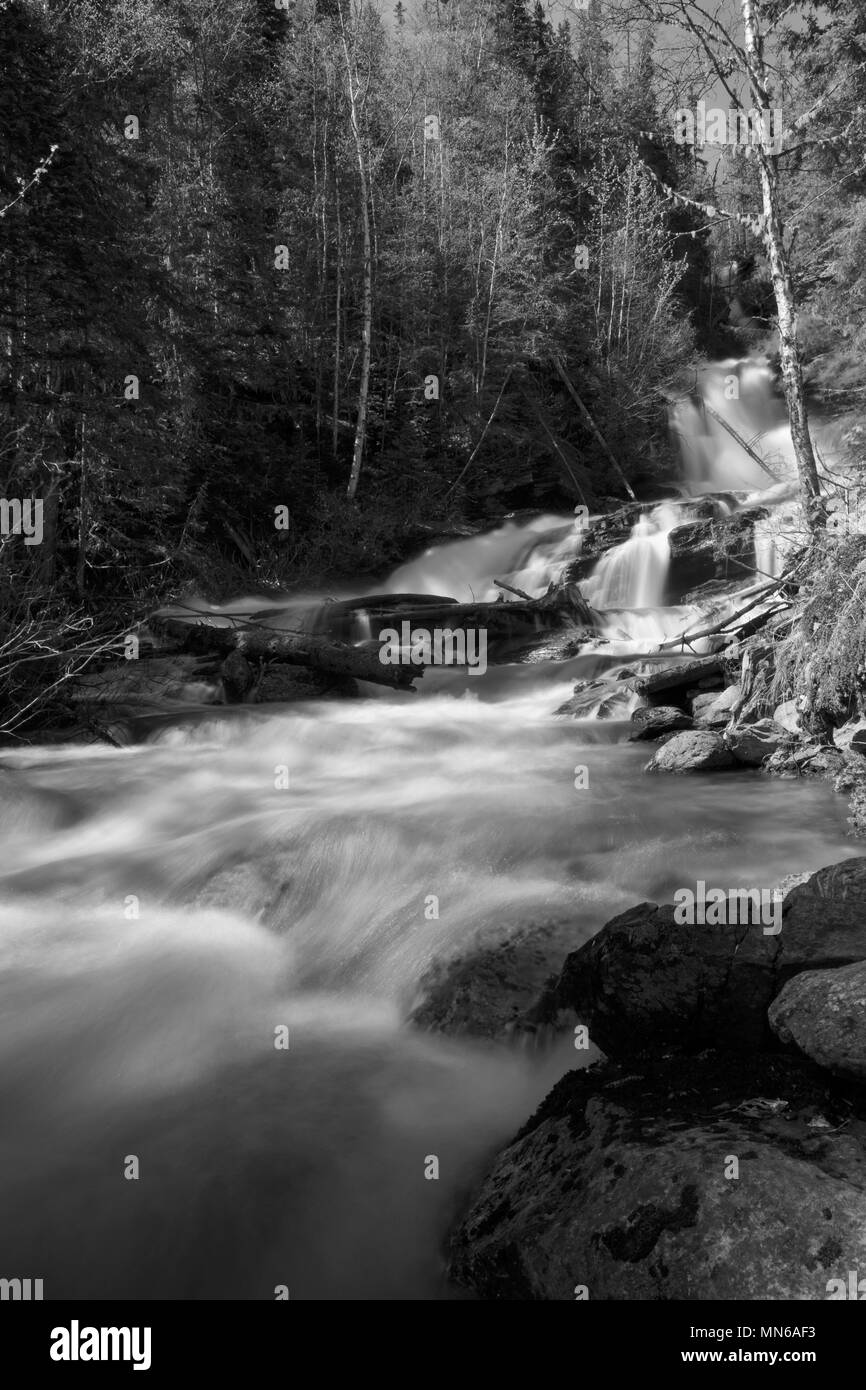 Beautiful slow motion summer waterfalls cascading down green forest hillside in Waterton Lakes National Park, BC Canada creative grayscale photograph - Stock Image