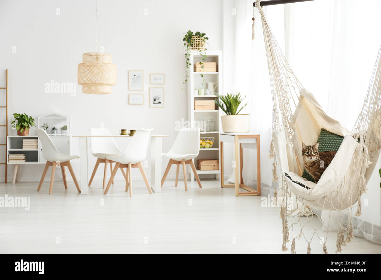 White Dining Room Interior With Table Chairs Lamp And Cat