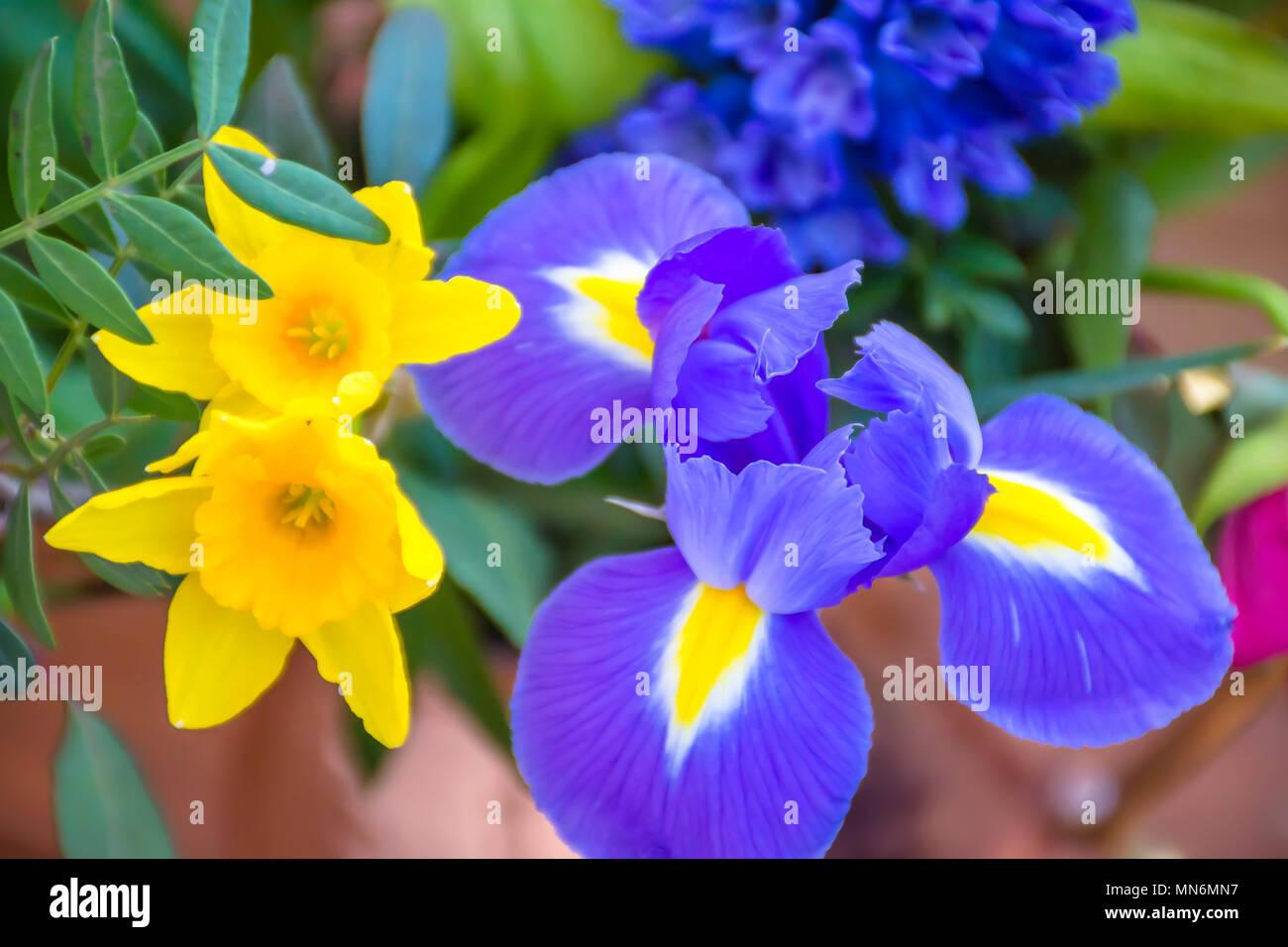 Beautiful Bouquet Of British Spring Flowerspurple Iris And Small