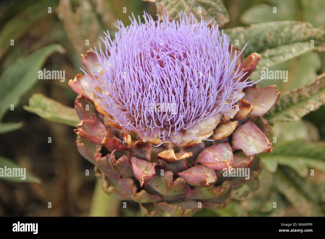 Bushey Stock Photos Amp Bushey Stock Images Alamy