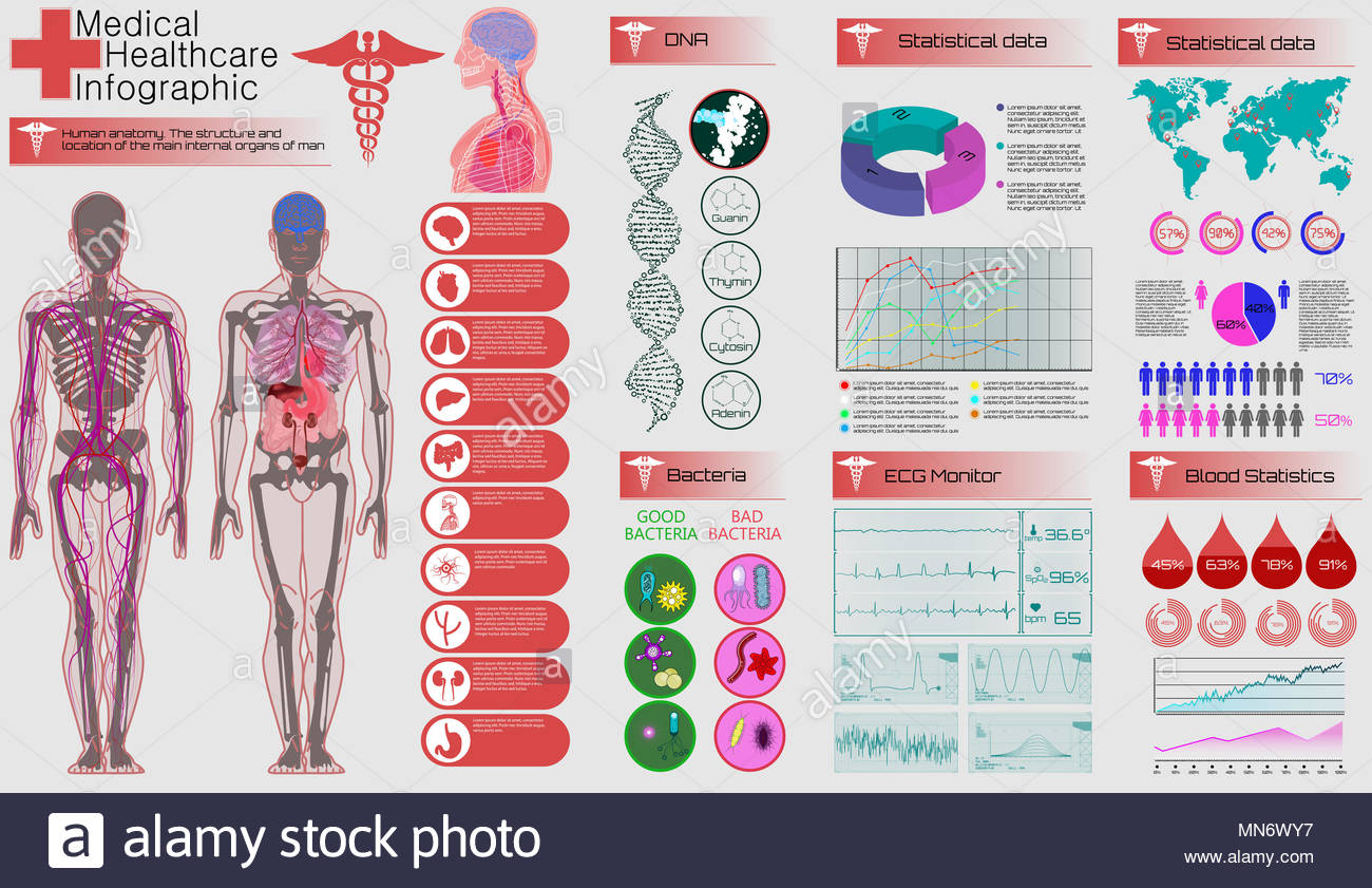 Medical Infographic Set Human Anatomy Body With Internal Organs