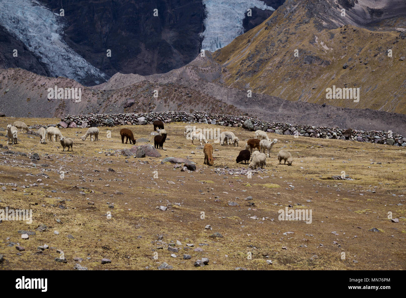 Apu Ausangate trek scenery - Stock Image