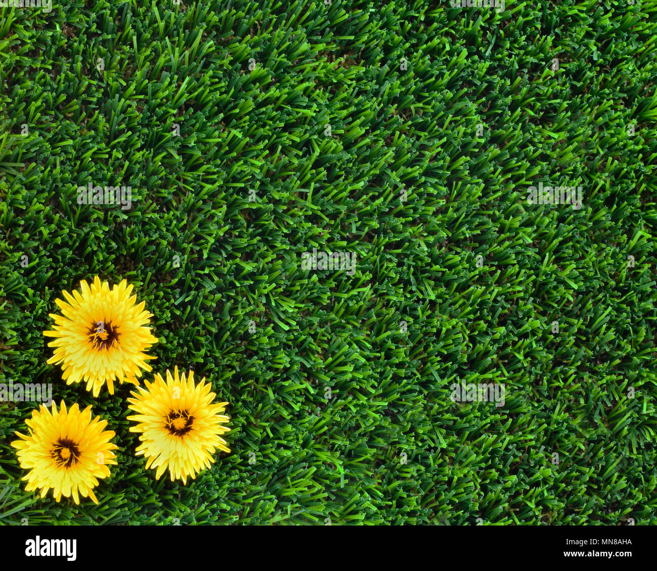 Copy space background for the concept of no weeds in the garden copy space background for the concept of no weeds in the garden pretty yellow flowers on artificial grass making room for text marketing and adverti mightylinksfo