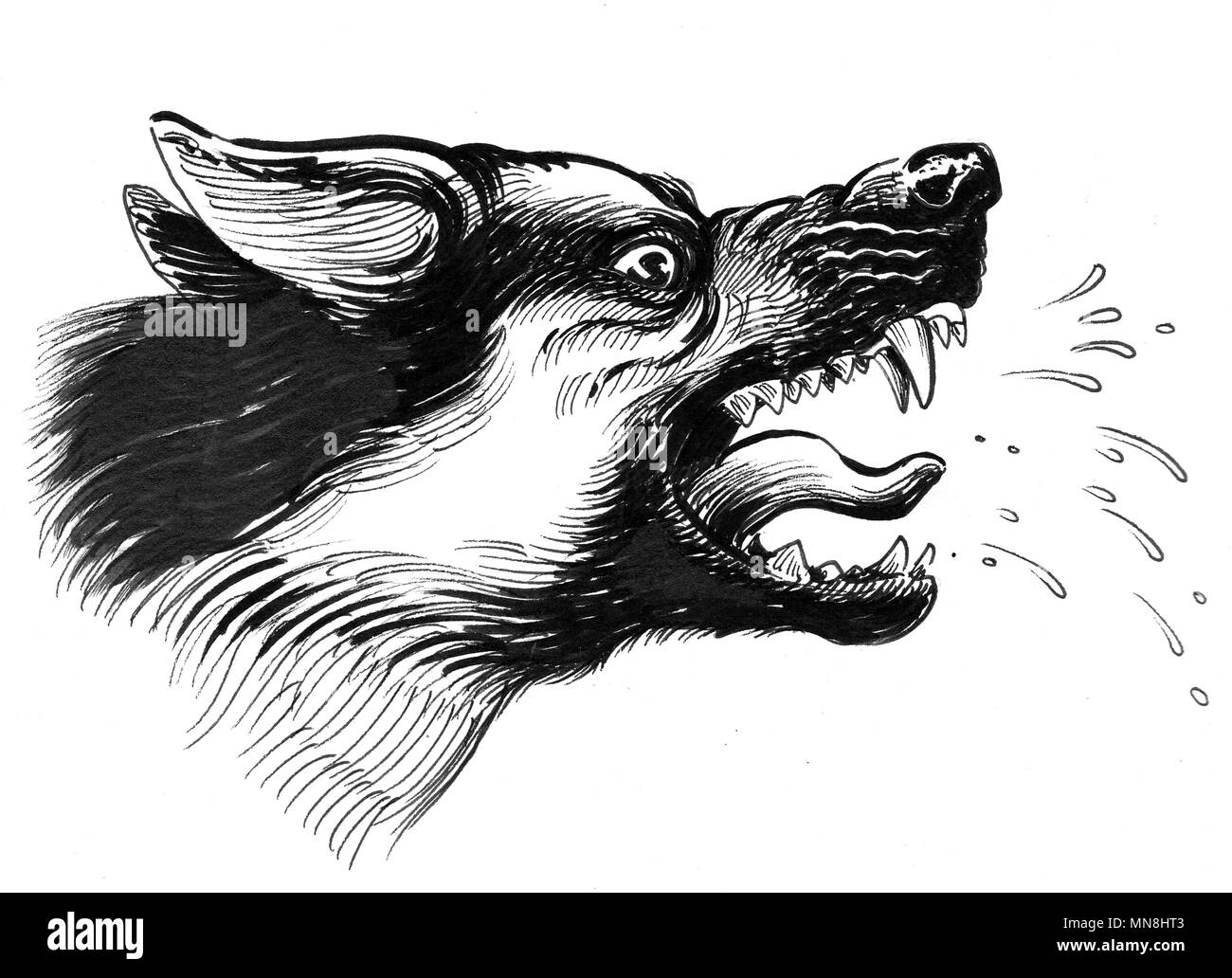 Aggressive Dog Black And White Stock Photos Images Alamy Mad Wiring Diagram Ink Illustration Image