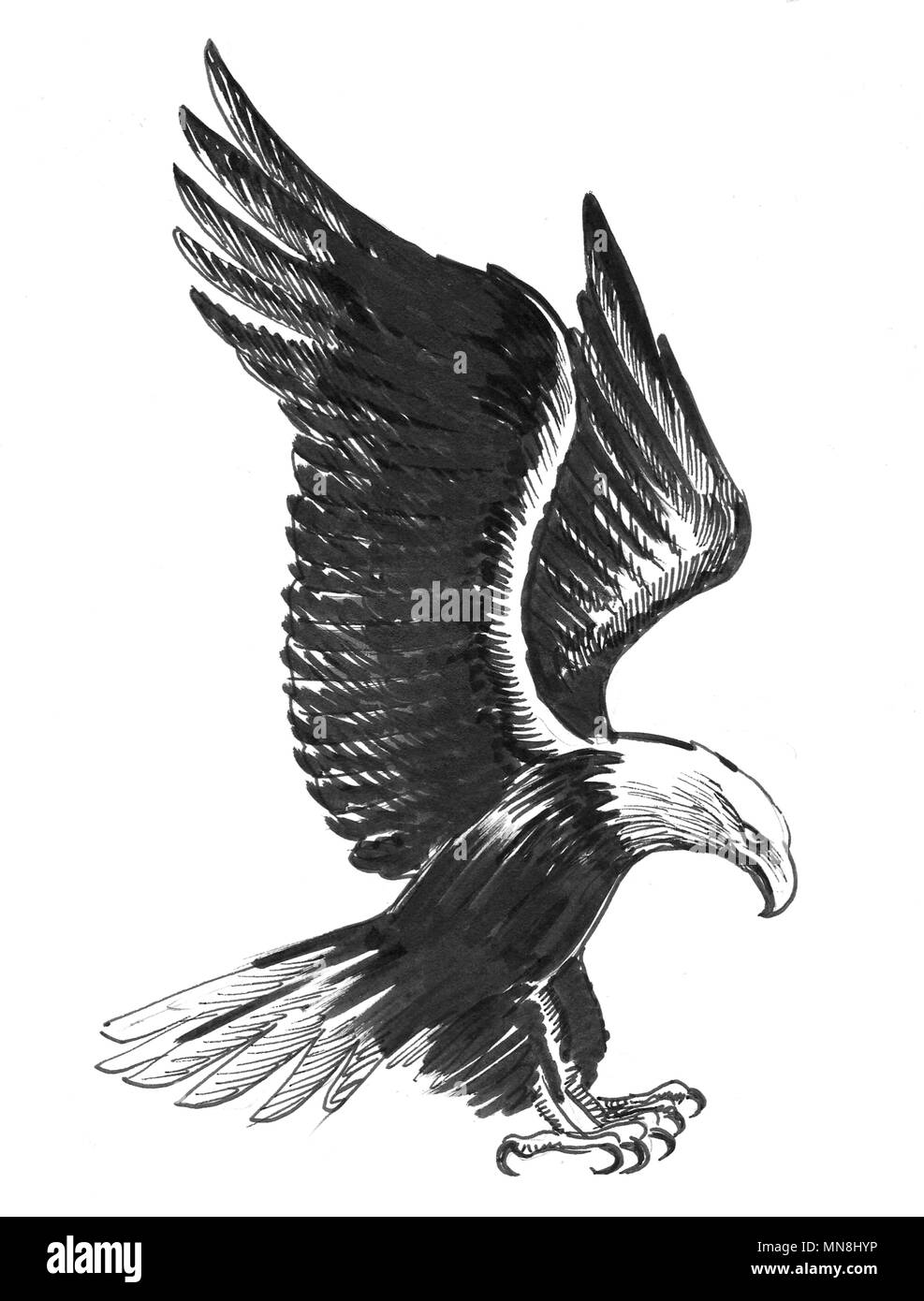Flying eagle ink black and white drawing stock image