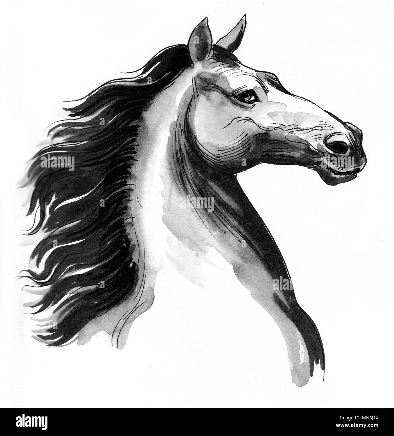 Beautiful Horse Head Ink Black And White Drawing Stock Photo Alamy