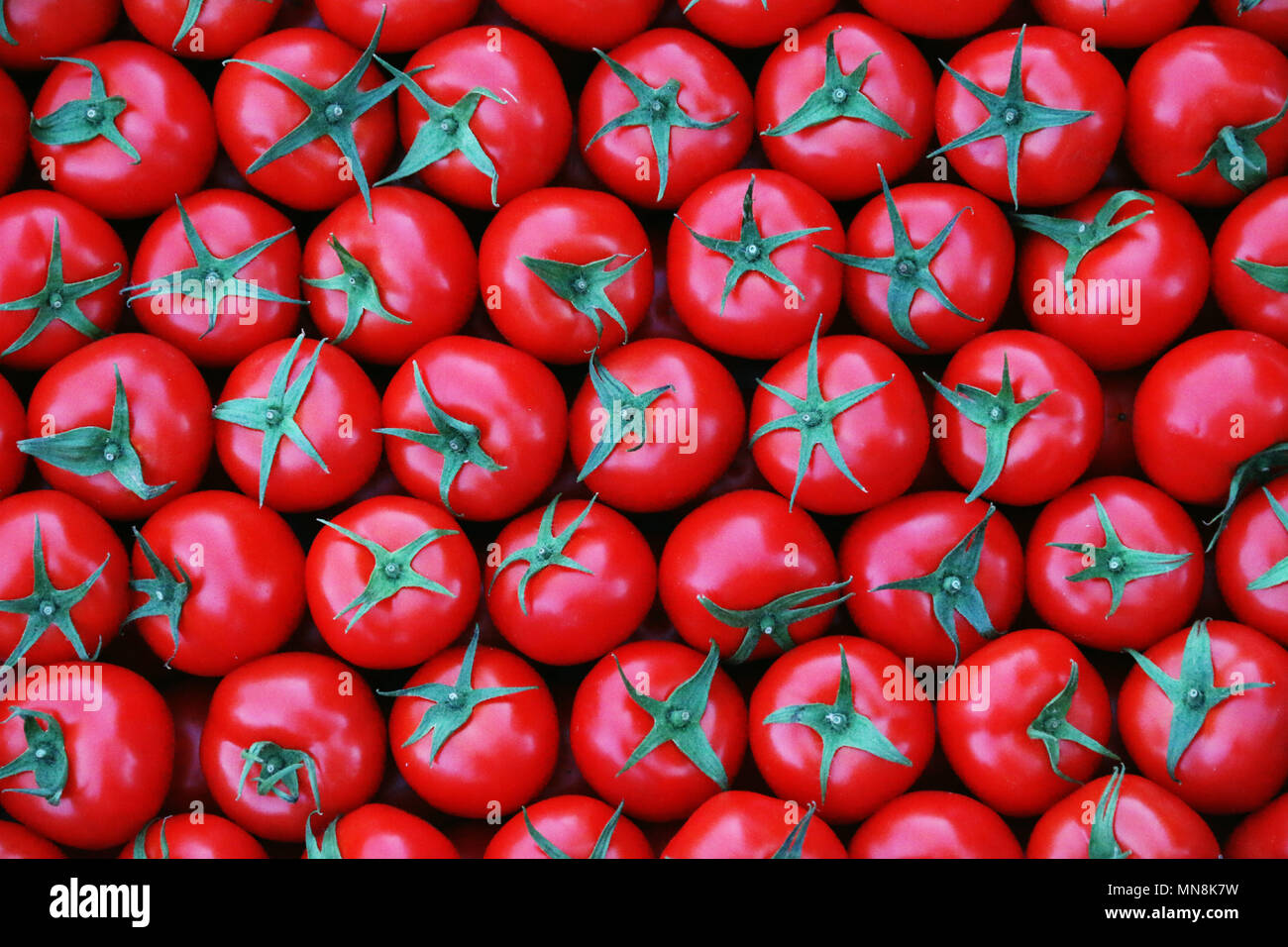 Group of fresh hungarian red tomatoes from the green grocery marketplace. Very tasty and always fresh and healthy vegan food. - Stock Image